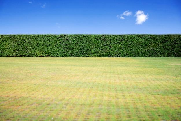 Trawnik z niebieskim niebem. Premium Zdjęcia