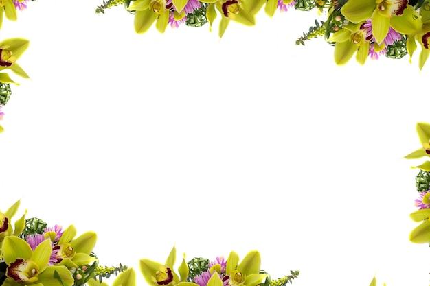 Tropikalna Kwiat Zieleni Orchidea Na Białym Tle Premium Zdjęcia