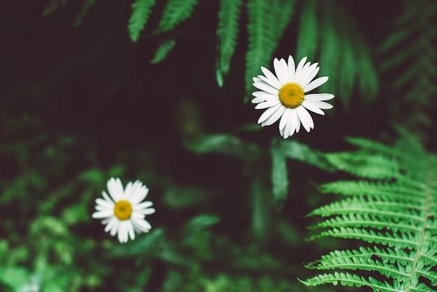 Tropikalne Liście I Biały Kwiat, Ciemne Tło Kwiatowy Premium Zdjęcia
