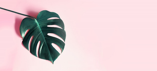 Tropikalne Liście Monstera Na Różowym Tle. Darmowe Zdjęcia