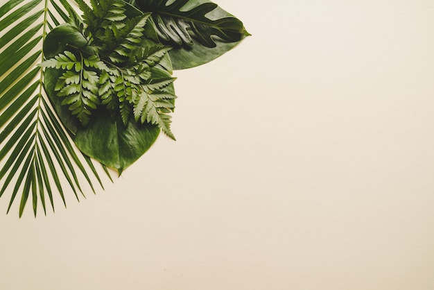 Tropikalne Liście Palmowe Na Beżowym Tle Premium Zdjęcia