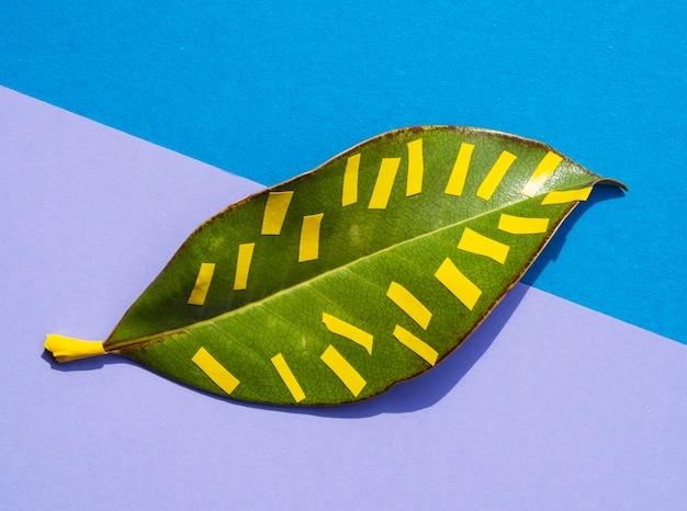 Tropikalny Liść W żywym, Odważnym Kolorze I żółtych Liniach Darmowe Zdjęcia