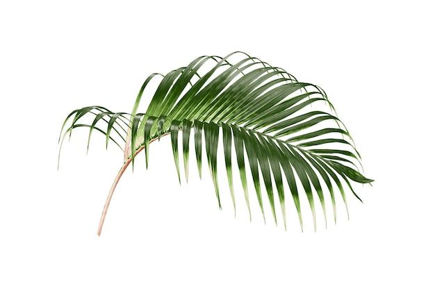 Tropikalny Zielony Liść Palmy Na Białym Tle Premium Zdjęcia