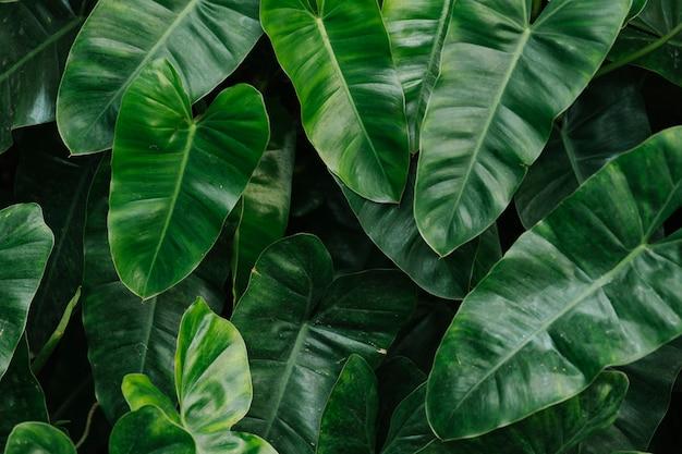 Tropikalny Zielony Liść Tło Darmowe Zdjęcia