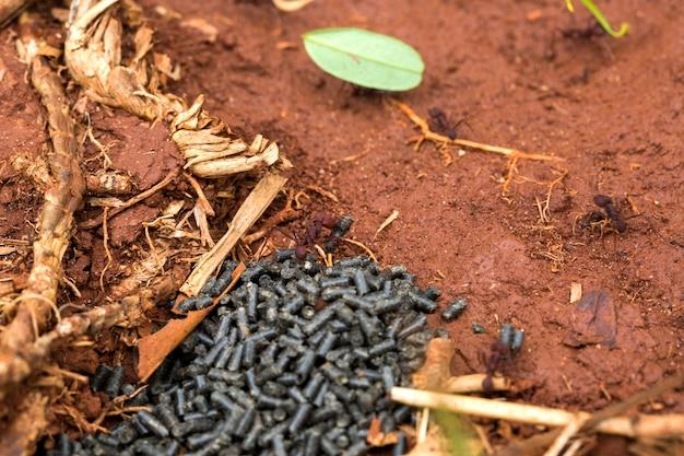 Trucizna Jedząca Mrówkę Premium Zdjęcia