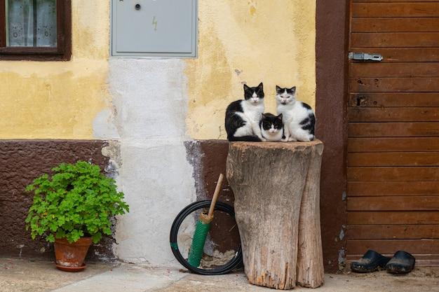 Trzy Koty Siedzą Na Drewnianym Pniu W Pobliżu ściany Premium Zdjęcia