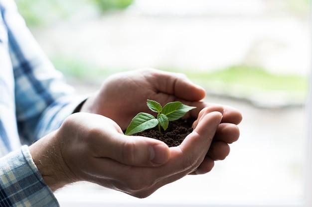 Trzymaj Ręce Drzewko W Powierzchni Gleby Premium Zdjęcia