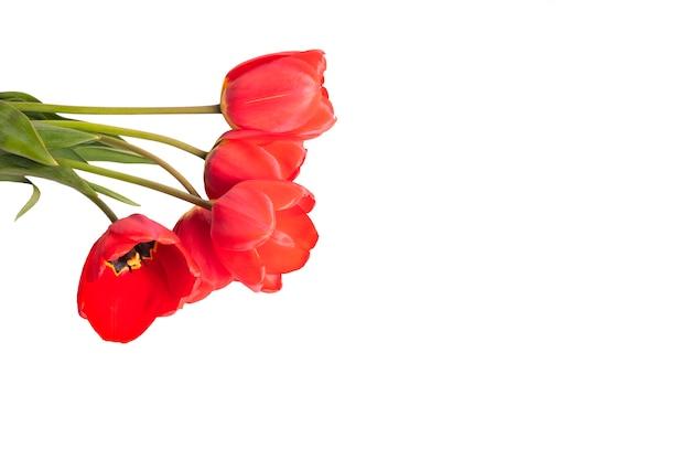 Tulipany Lato. Bukiet Czerwonych Tulipanów Premium Zdjęcia