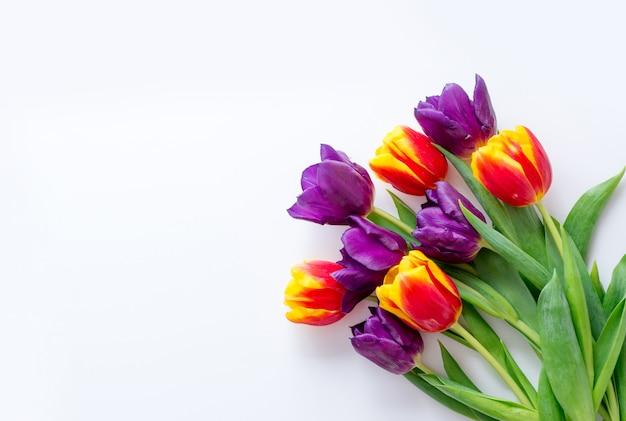 Tulipany żółte Czerwone Fioletowe Na Białym Tle. Rama Dla Karty Z Pozdrowieniami Z Miejscem Na Tekst Premium Zdjęcia
