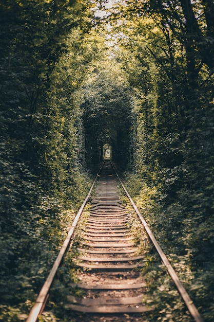Tunel kolejowy z drzewami i krzewami, tunel miłości Darmowe Zdjęcia