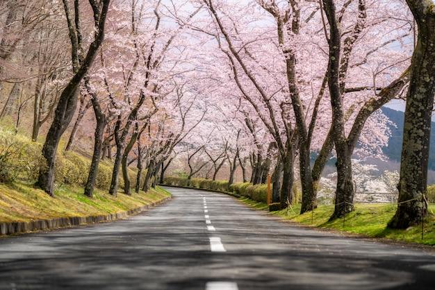 Tunel Kwitnących Wiśni W Sezonie Wiosennym W Kwietniu Wzdłuż Obu Stron Autostrady Prefektury Premium Zdjęcia