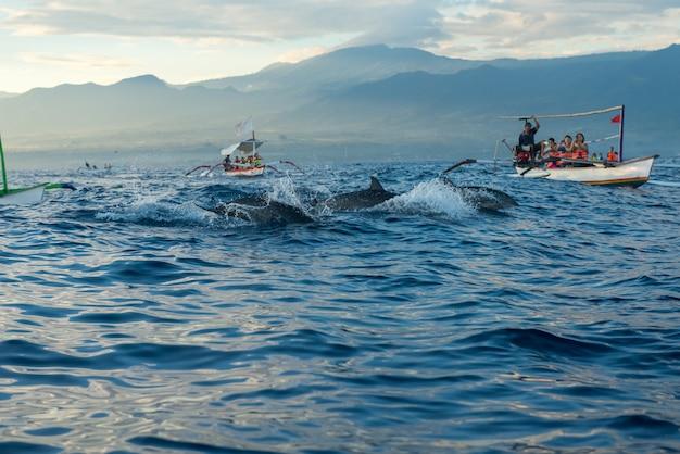 Turyści Wybierają Się Na Wycieczkę Delfinów Premium Zdjęcia