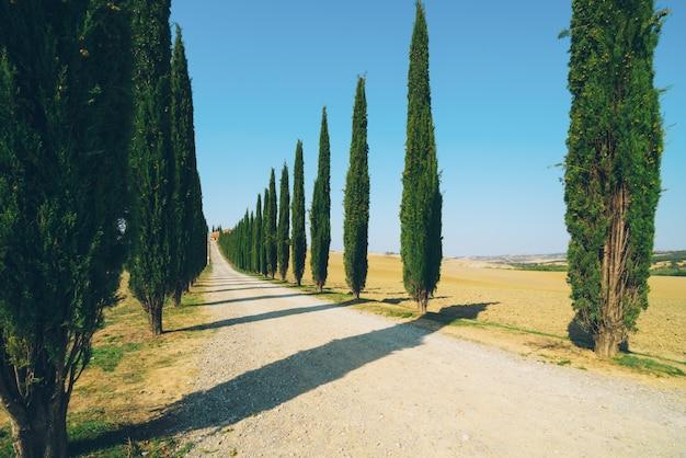 Tuscany Krajobraz Cyprysowi Drzewa Drogowi W Włochy. Premium Zdjęcia