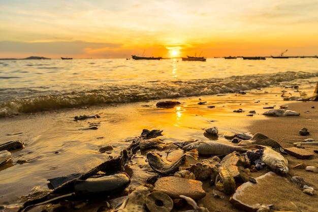 Tusze Stworzeń Morskich Na Plaży Podczas Zachodu Słońca Premium Zdjęcia