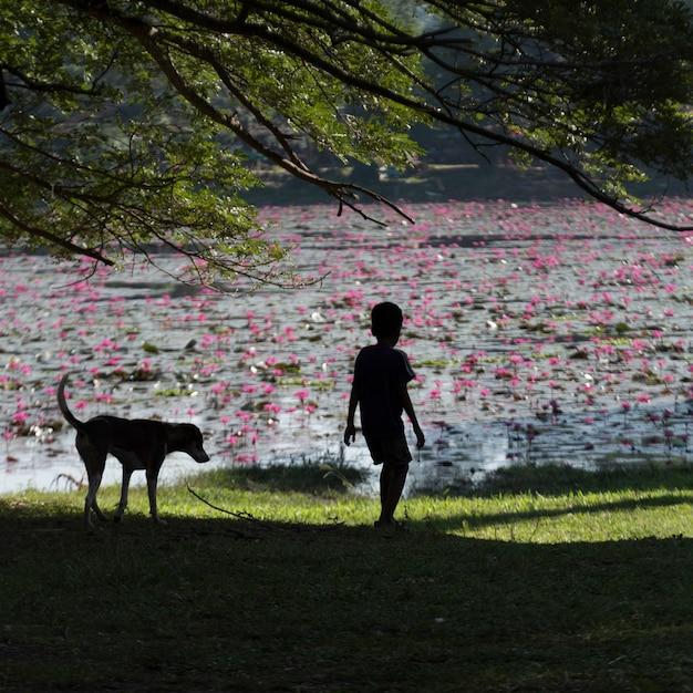 Tylni Widok Chłopiec Pozycja Na Trawie Z Psem, Krong Siem Przeprowadza żniwa, Siem Przeprowadza żniwa, Kambodża Premium Zdjęcia