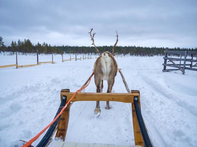 Tylni Widok Reniferowy Sanie Na śniegu Zakrywał Krajobraz W Snowed Lesie Premium Zdjęcia
