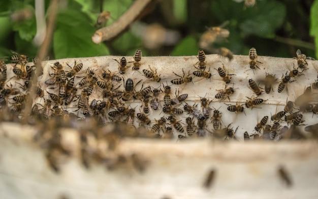 Ujęcie Kilku Pszczół W Ulu Darmowe Zdjęcia