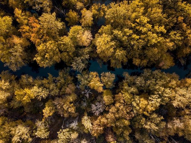 Ujęcie Z Góry Rzeki Pośrodku Brązowych I żółtych Liści Drzew Darmowe Zdjęcia