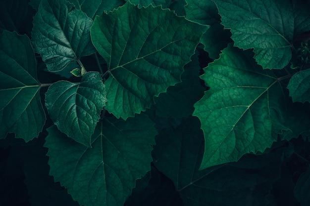 Ulistnienie tropikalny liść w ciemnozielonej teksturze, abstrakt natury deseniowy tło. Premium Zdjęcia