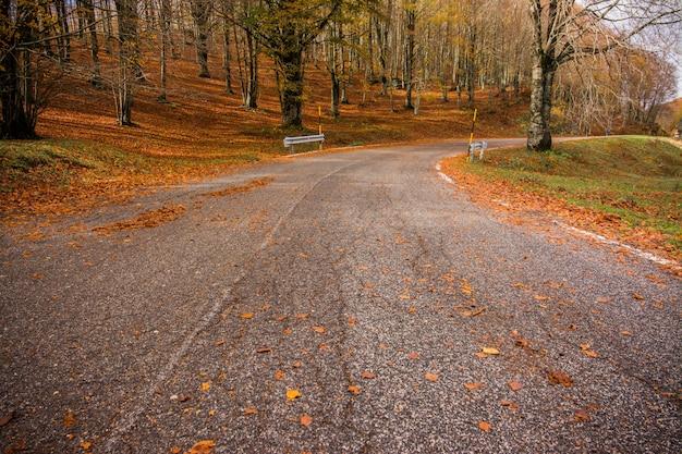 Ulistnienie w monti simbruini parku narodowym, lazio, włochy. droga przez las. jesienne kolory w buku. buk z żółtymi liśćmi. Premium Zdjęcia