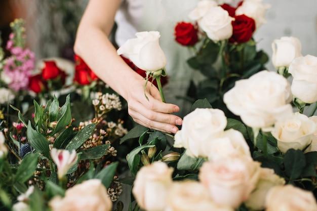 Upraw Kwiaciarni Zrywanie Wzrastał Dla Bukieta Darmowe Zdjęcia