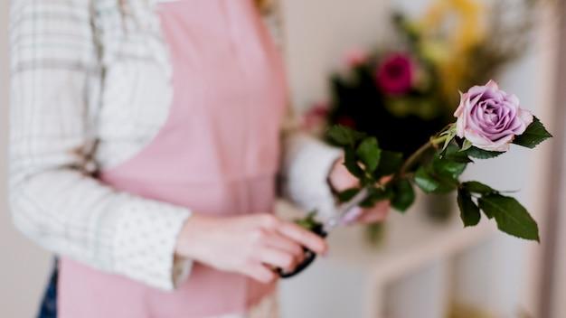 Uprawa Kobiety Kwiaciarni Przygotowania Wzrastał Darmowe Zdjęcia