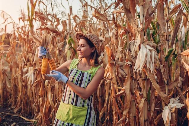 Uprawa kukurydzy młoda kobieta rolnik sprawdza żniwa kukurydzanego i podnosi. pracownik trzyma jesień kaczany kukurydzy. prace ogrodowe Premium Zdjęcia
