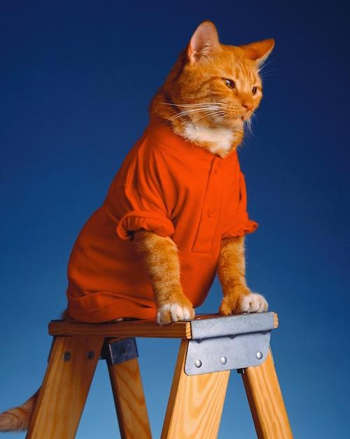 Urocza Kotka W Czerwonych Ubraniach Siedzi Na Drewnianej Drabinie Darmowe Zdjęcia
