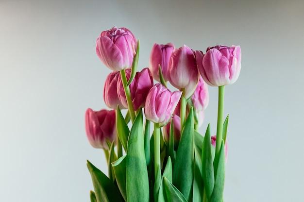 Urocze Różowe Kwiaty Piwonii Tulipany Premium Zdjęcia