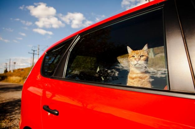 Uroczy Kot Ogląda Niebo Od Samochodu Darmowe Zdjęcia