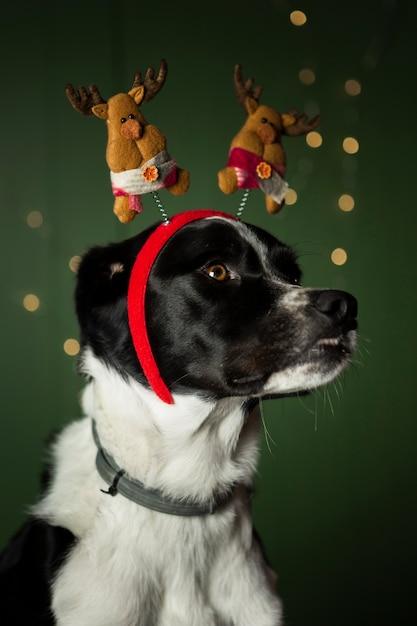 Uroczy Pies Z Czerwoną Koroną Z Reniferami Darmowe Zdjęcia
