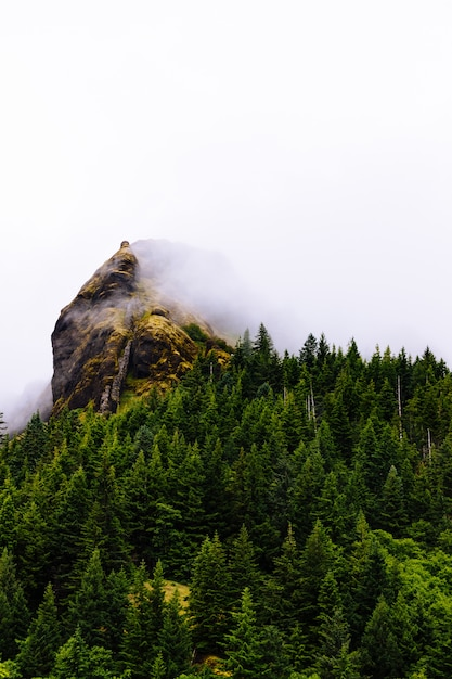 Vertical Strzał Drzewa Blisko Góry W Mgle Z Białym Tłem Darmowe Zdjęcia