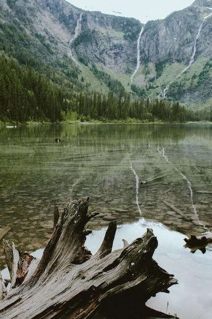 Vertical Strzał łamany Drzewo W Lawinowym Jeziorze Blisko Lasu I Góry Darmowe Zdjęcia