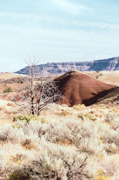 Vertical Strzał Mały Wzgórze W Suchym Trawiastym Polu Z Wysokimi Skalistymi Górami W Tle Darmowe Zdjęcia