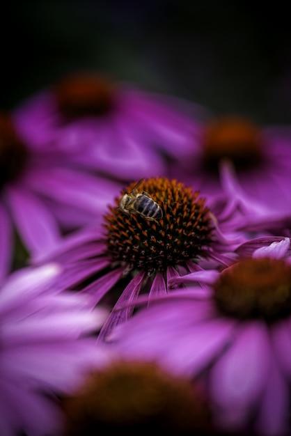 Vertical Strzał Pszczoły Zbieracki Nektar Na Purpurowym Kwiacie Na Zamazanym Tle Darmowe Zdjęcia
