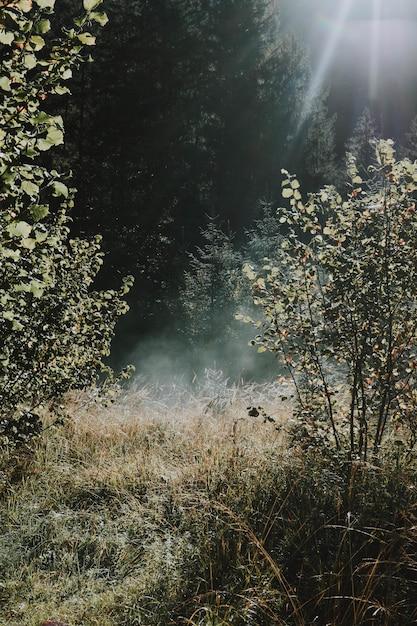 Vertical Strzał Słońce Wzrasta Nad Suchym Lasem W Spokojnym Słonecznym Dniu Darmowe Zdjęcia