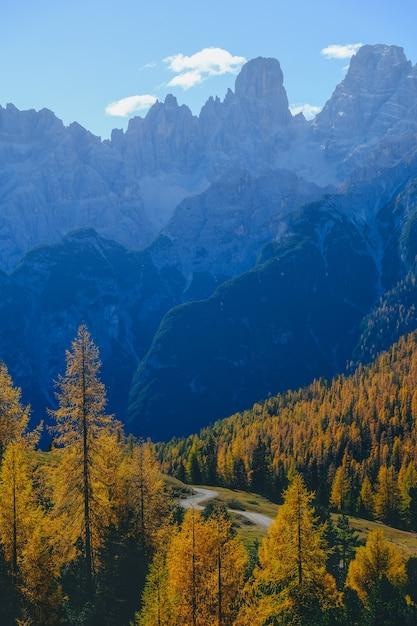 Vertical Strzał żółci Drzewa I Góry Z Niebieskim Niebem W Tle Darmowe Zdjęcia