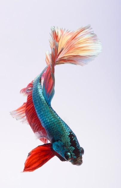 niebieskie ryby randki serwisy randkowe dla 13-16