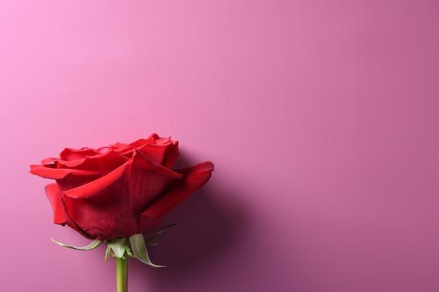 Walentynki Karty Z Pozdrowieniami Symbole Miłości, Czerwona Ozdoba Z Różami Na Różowym Tle. Widok Z Góry Z Miejsca Na Kopię I Tekst. Mieszkanie Leżał Premium Zdjęcia