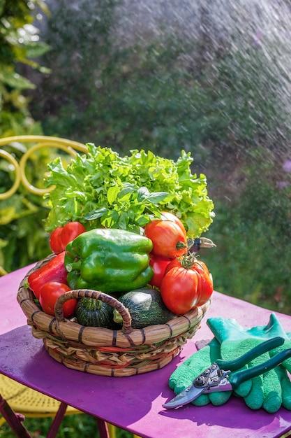 Warzywa Na Stole W Ogrodzie Darmowe Zdjęcia