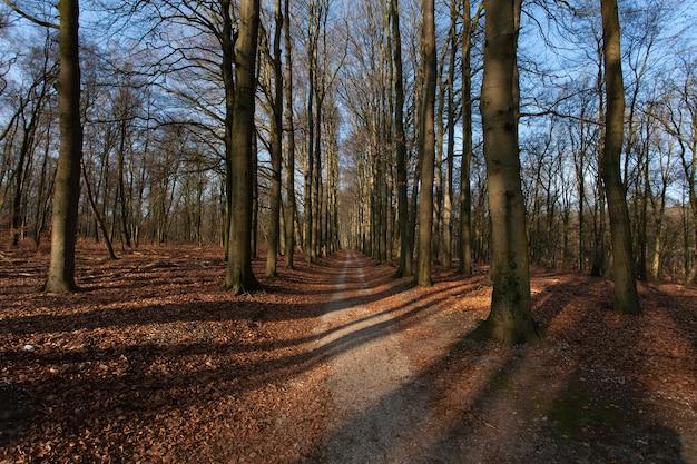 Wąska ścieżka Pośrodku Wysokich Bezlistnych Drzew Pod Błękitnym Niebem Darmowe Zdjęcia