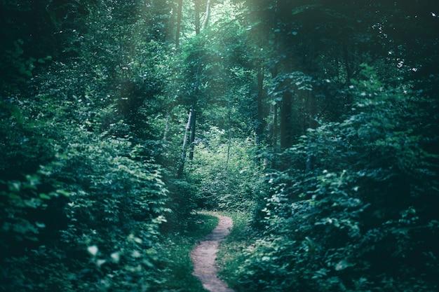 Wąska ścieżka w ciemnym lesie oświetlona promieniami słońca. Premium Zdjęcia