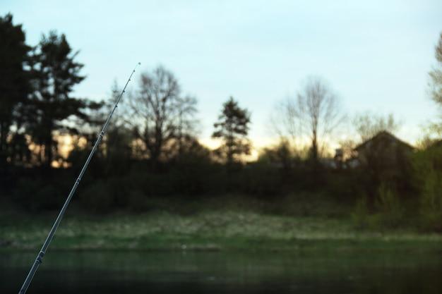 Wędki Z Drzewami Tła Darmowe Zdjęcia