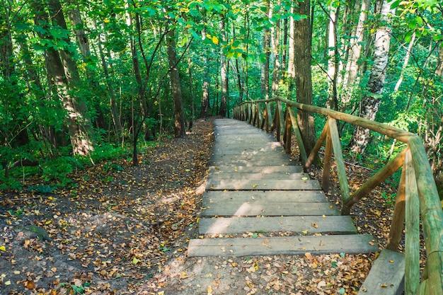 Wędrówka Po Drewnianych Schodach Na Leśnym Szlaku W Lesie. Szlak Turystyczny Deep Forest. Premium Zdjęcia
