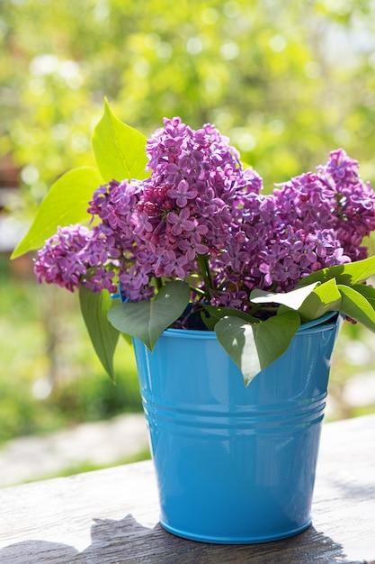 Wiadro Z Gałęzią Kwiatu Bzu Darmowe Zdjęcia