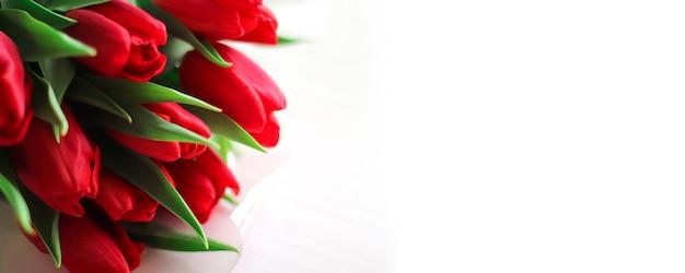 Wiązka Czerwoni świezi Tulipany Na Białej Tło Szablonu Kopii Przestrzeni Premium Zdjęcia