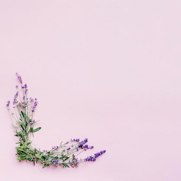 Wiązka Delikatni Lawendowi Kwiaty Tworzy Ramę Na Różowym Tle Darmowe Zdjęcia