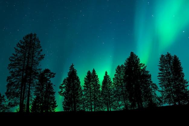 Widok Na Las Z Nocnym Niebem Premium Zdjęcia