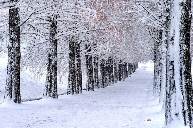 Widok Na ławkę I Drzewa Z Padającym śniegiem Darmowe Zdjęcia