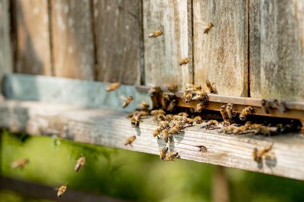 Widok Pszczół Pracujących Przynoszących Pyłek Kwiatowy Do Ula Na łapach. Miód Jest Produktem Pszczelarskim. Miód Pszczeli Zbiera Się W Pięknych żółtych Plastrach Miodu. Premium Zdjęcia